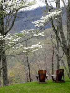 dogwood and chairs