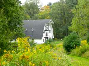 Millay barn with goldenrod